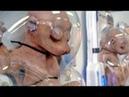HUMΑN ANΙMΑL HYBRIDS ΥOU WOΝ'T BELΙEVE EXΙST (CREEΡΥ FOOTΑGE SPECΙMENS - EVERYTHING REVEALED)