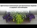 Цветочные композиции для балконных ящиков и садовых контейнеров