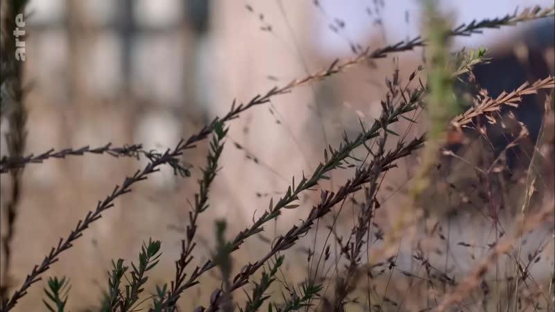 Erstaunliche Gärten - Der High Line Park, eine Gartentrasse durch New York