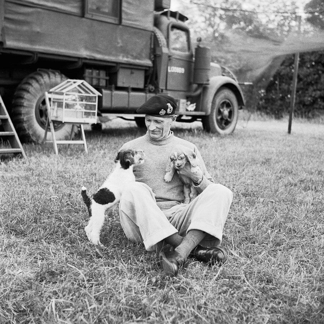 Генерал Монтгомери со своими щенками Гитлером (слева) и Роммелем (справа), 1944 год.