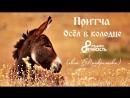 Елена Понкратова Притча Осел в колодце