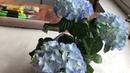 Casting Flowers Imprints Of Plants Tutorial/ Отпечатки Растений Гипс Домашний Декор Мастер-класс