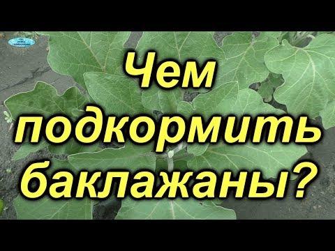 Подкормка баклажан для повышения урожая!