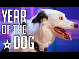 Celebrating THE BEST DOG AUDITIONS &amp TRICKS EVER On Got Talent From Around The World