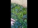 осенняя клубничка