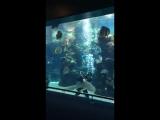 Леопардовая акула подплыла к мужчине, который чистил аквариум и напросилась на ласку. Мужчина