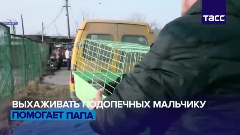 Шестилетний мальчик из Владикавказа спасает бездомных животных и находит им хозя