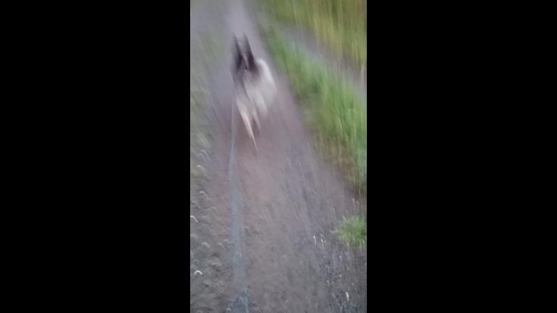 Беги Макс, беги!