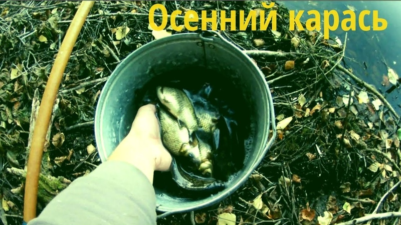 Ловля карася осенью. Отчет о рыбалке. Пол ведра карасиков за два часа.