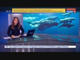 В Японии возродят китобойный промысел