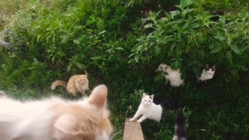 КОШКИН ДОМИК Кошки друг за дружкой интересные видео