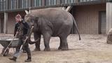 10 03 19 Zoo Berlin, Elefant
