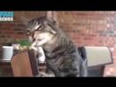 Приколы 2019 с котами смешные коты смешные кошки и приколы Юмор видео и Мемы 2019 про кошек с людьми про котов с кошками лучшее