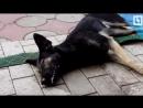 Массовое убийство собак в Башкирии