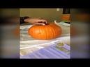 Little girl scared of pumpkin!