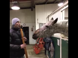 This horse feels the beat..
