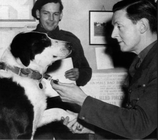 Медаль Марии Дикин высшая воинская награда Великобритании для животных, учреждённая в 1940-е основательницей благотворительной организации помощи животным Марией Дикин. Медаль сделана из бронзы