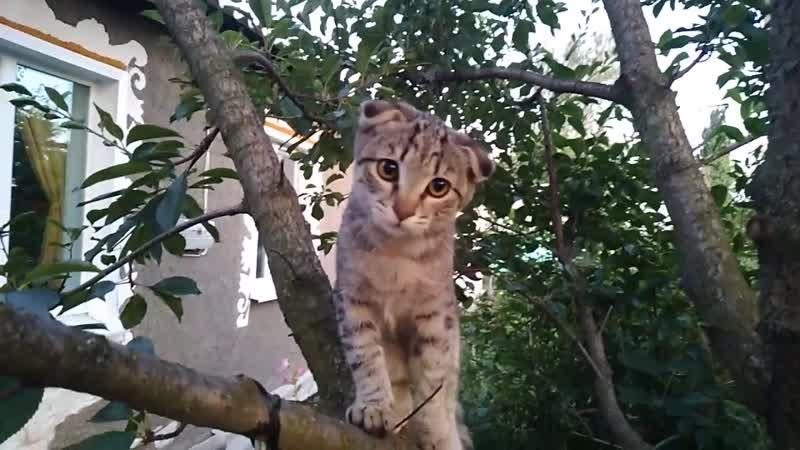 Дайте музыку кот на дереве