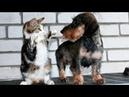 ПОПРОБУЙ НЕ ЗАСМЕЯТЬСЯ - Смешные Приколы с Животными до слез, смешные коты, funny cats 99
