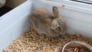 How falls asleep rabbit