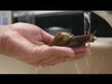 NO COMMENT Un escargot qui aime l'eau