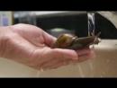 NO COMMENT : Un escargot qui aime l'eau
