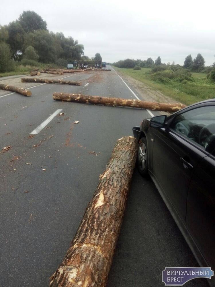 На трассе под Пинском перевернулся лесовоз - брёвнами повреждены несколько автомобилей