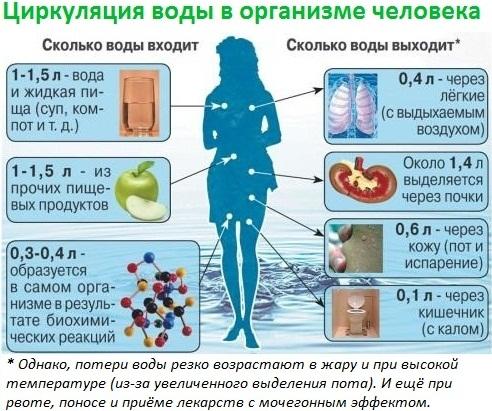 Водоворот в организме человека