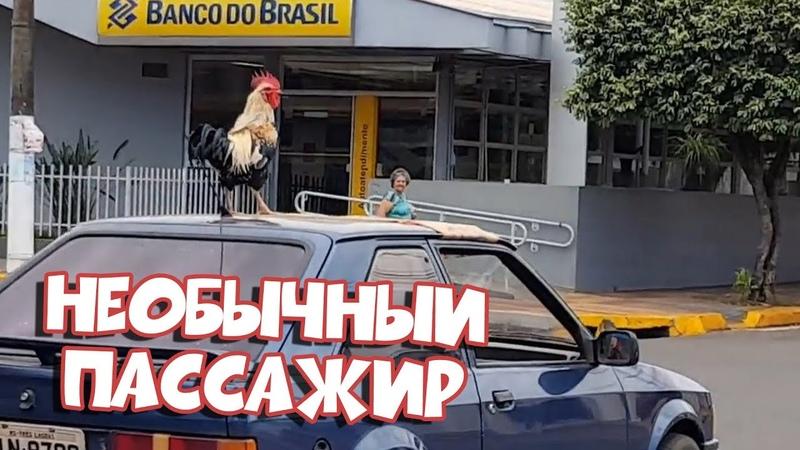 НЕОБЫЧНЫЙ ПАССАЖИР Лучшие Приколы Засмеялся Проиграл BugagaTV