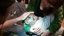 Сколько нужно зоологов, чтобы спилить Ёлку под самый корешок Обработка клюва филина