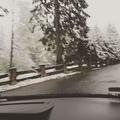 albina_alusha video