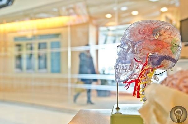ННейроморфные системы: компьютеры, вдохновлённые устройством человеческого мозга