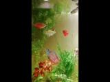 Огромный выбор красивых рыбок.Лялиусы, гурами,моллинезии и др