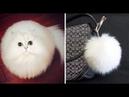 СМЕШНЫЕ КОТЫ - Смешные кошки Приколы про кошек и котов 2018 ИЗБРАННОЕ русское