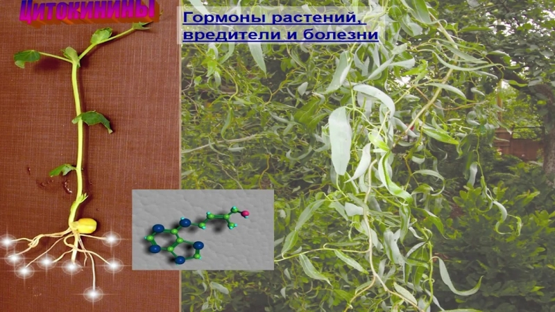 Гормональная система растений (Чуб В. В) часть 1