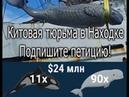 Китовая тюрьма в Находке Бесчеловечное обращение Подпишите петицию Whale prison Russia drone