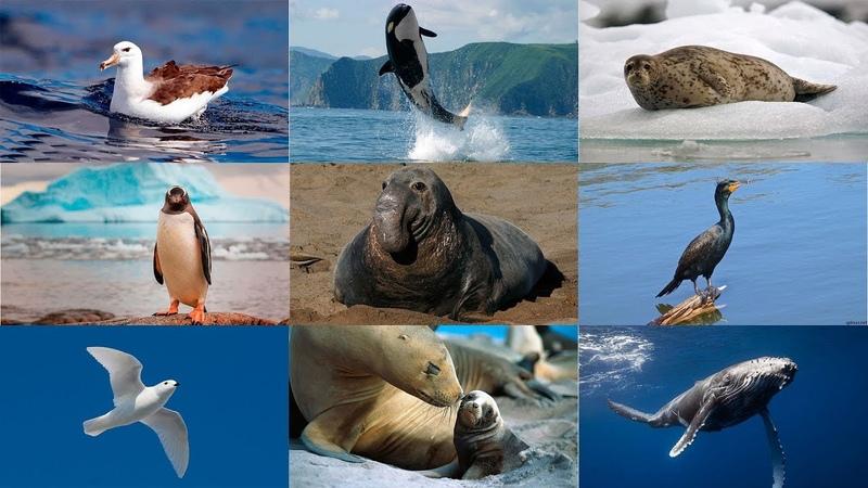 Как говорят животные. Развивающее видео для детей. Животные Антарктиды . Голоса животных