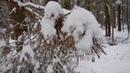 Зимний лес в Новопеределкино
