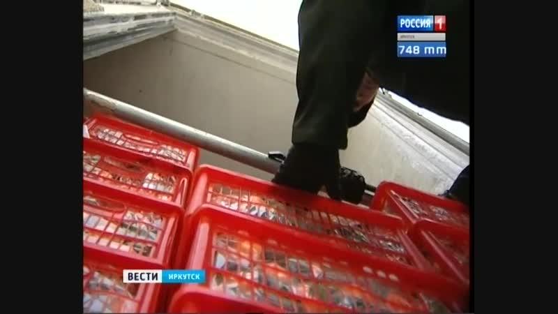 Мандариновый рай Откуда привозят и как выращивают в Иркутске новогодний фрукт