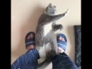 Kung Fu Meowster