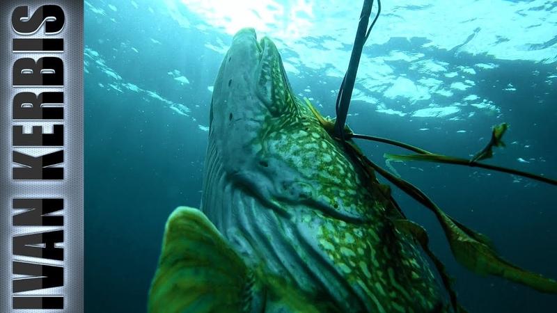 Тувинское сафари на щуку Подводная охота в Туве Тизер