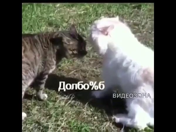 Кот говорит долб*%б