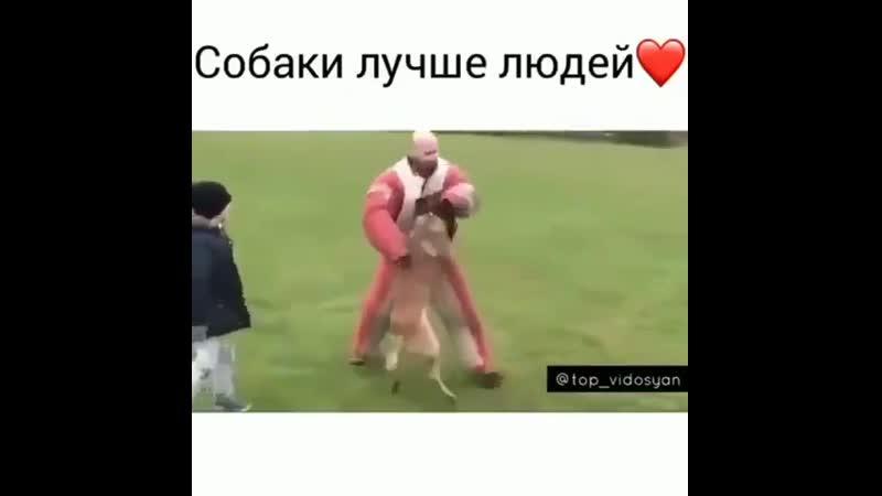 Собака верный друг.