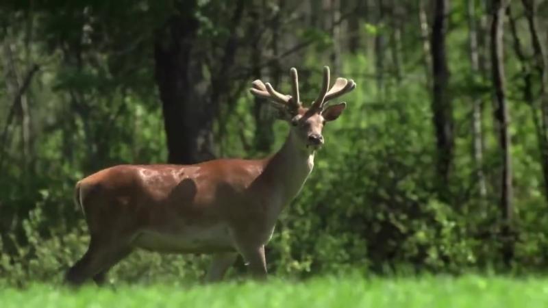 Wildlife Belarus - 2015. Film Studio AVES