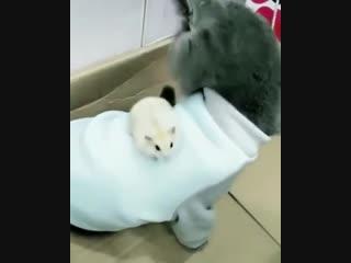 Boss Hamster