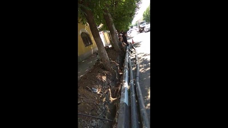 Коммунальщики убивают чудесные ясени на улице. Горького в Рязани
