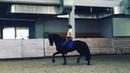 """Natalia Martyanova on Instagram: """"Итак.. Ещё немного о посадке 😁 Один из самых лучших способов улучшить свою посадку- это тренировка без стремян! Е..."""
