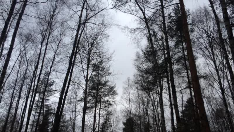 Nature Автор видео ролика Роман Зайцев