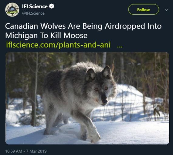 В Мичигане десантируютКанадских волков для убийства лосей