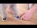 Summer Pet Shoes